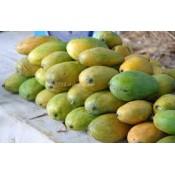 Malgova Mango (0)