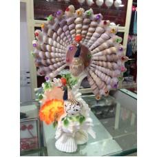 Double Peacock Shell