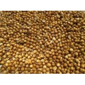 Coriander Seeds (1)